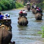Elefanttur i Thailand